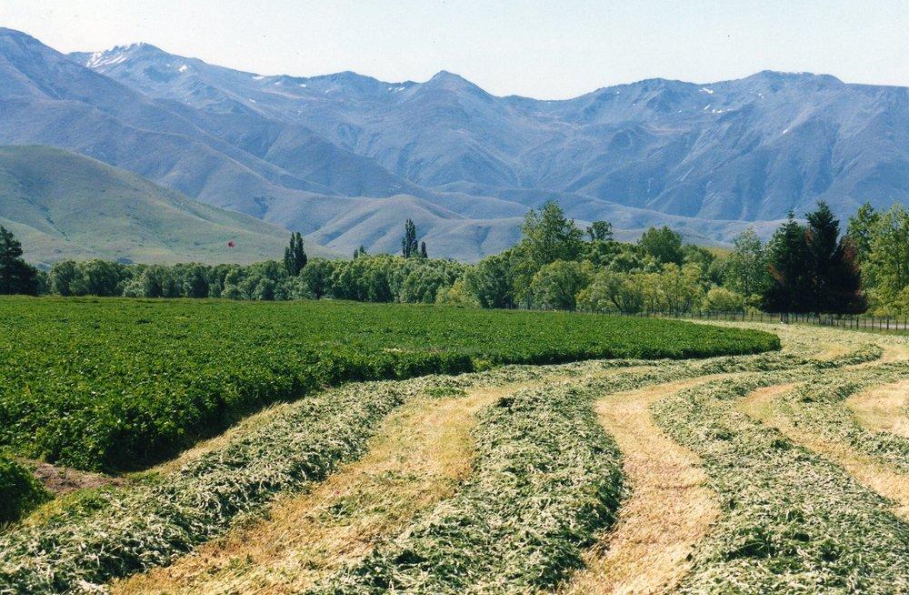 Irrigation001.jpg