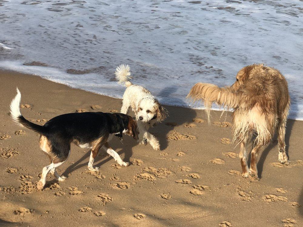 Brodie, Sparky & Herbie