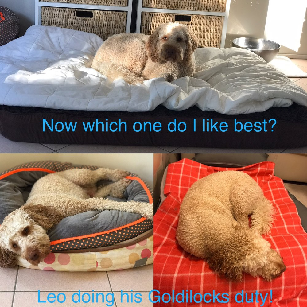 If you've looked at my web site you will often see Leo, he is a regular. He feels it's his duty to try out all the beds - and as you can see he even likes a two tier pair of beds!
