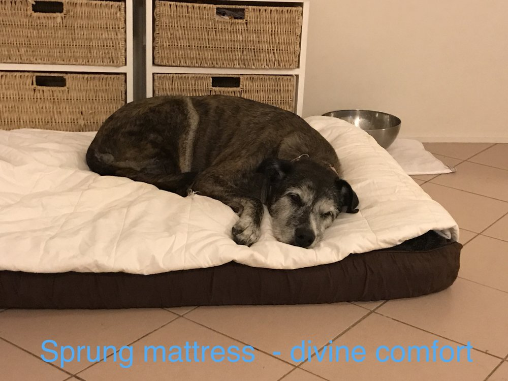Here is dear Twisty, age 14, a big Wolfhound cross breed enjoying the sprung mattress - with a duvet on top as well for even more luxury.