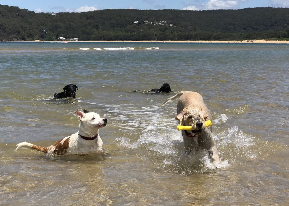 Coco at Umina with Izzy, Kuro and Hugo