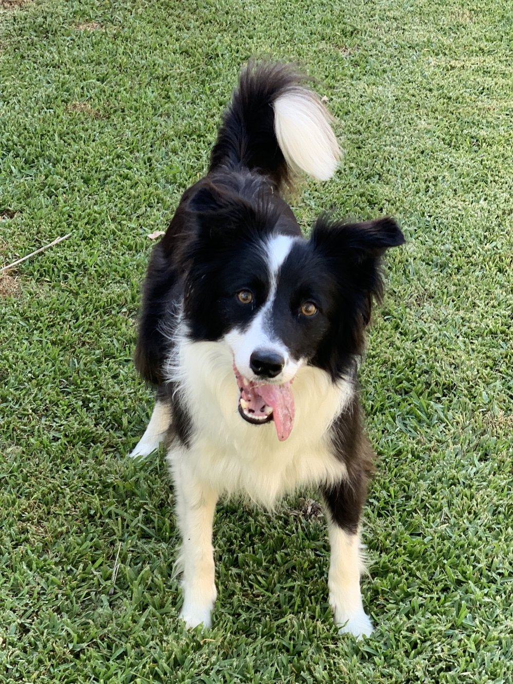 Tess is a 3 year old Border Collie who could possibly be the fastest dog that has ever stayed. She runs down balls at amazing speed, see her on the Videos page.