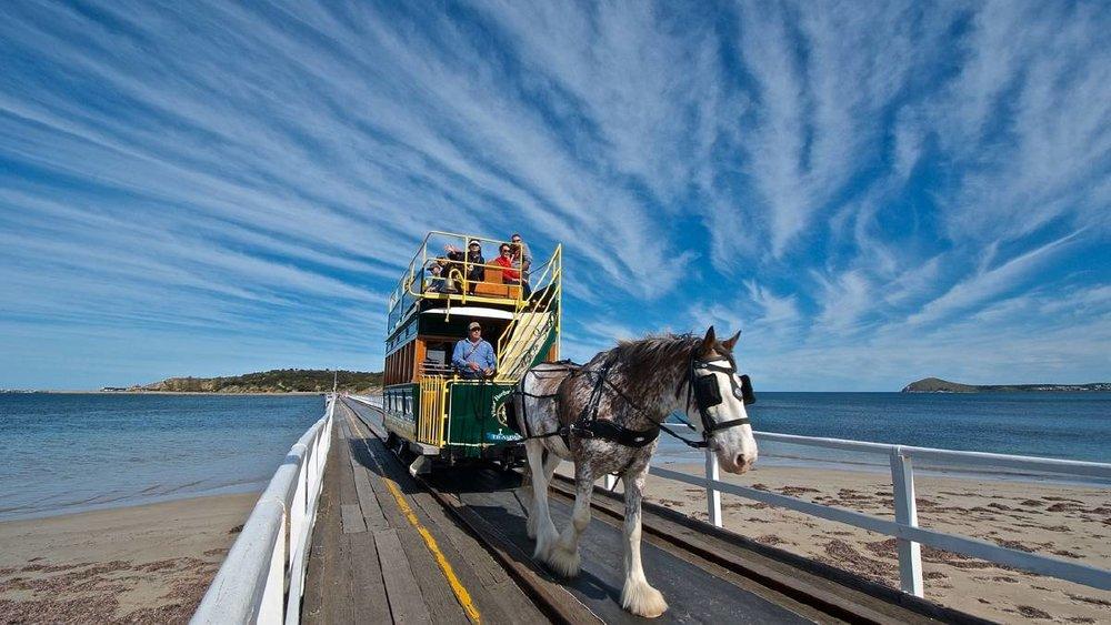 horse tram.jpeg