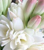 tuberose-flower.jpg