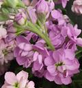 stock-flower.jpg