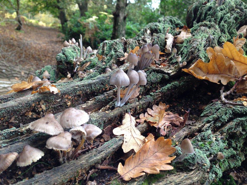Woodland Mushrooms Catherine Frere-Smith