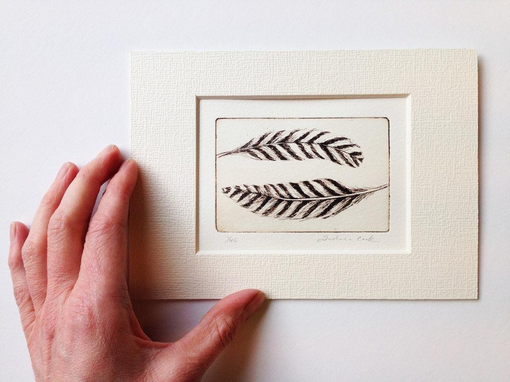 feather stripy2.JPG