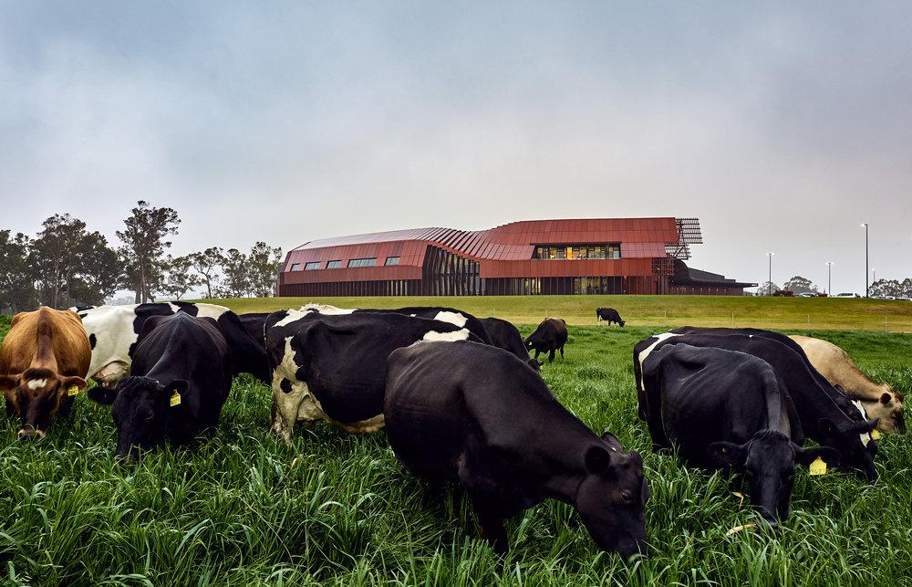 grazing paddock