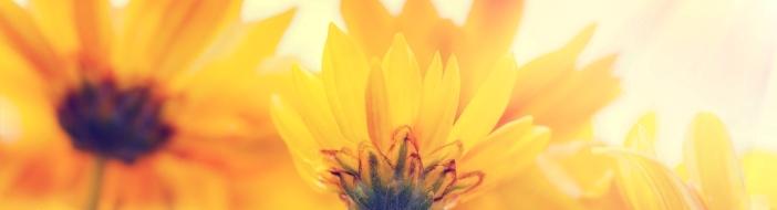 tulips-2002322_1920.jpg
