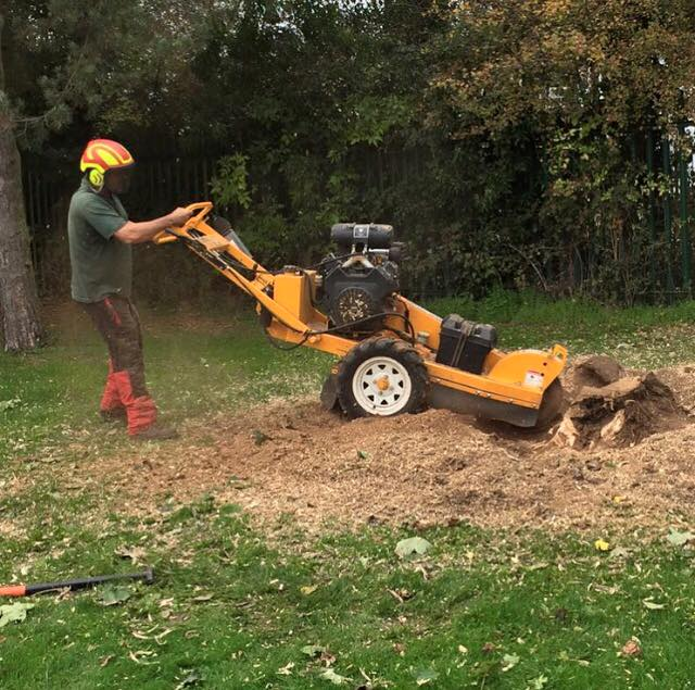 Mark working away at an unwanted stump