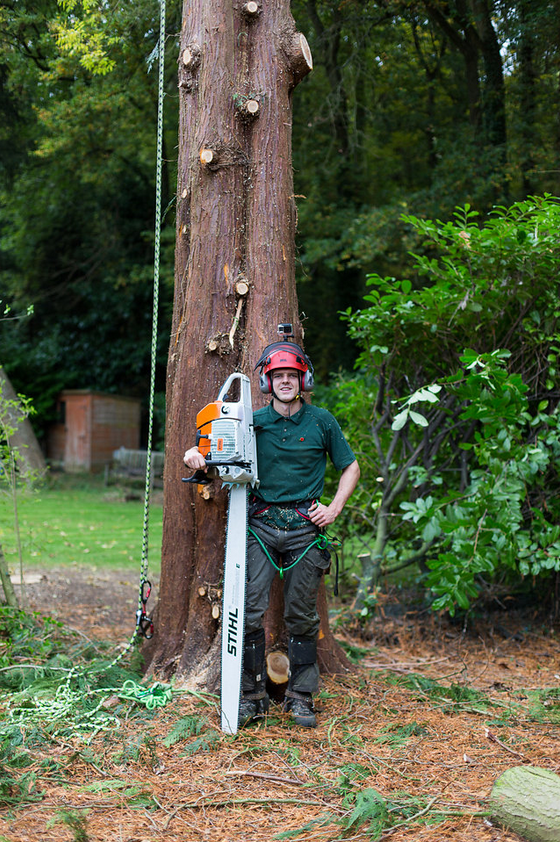END - Our tree surgeon leaves the tree safely