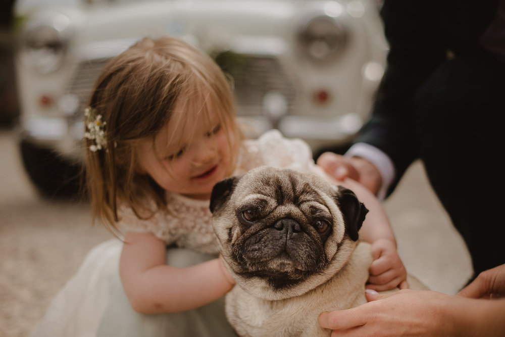 wedding pug.jpg