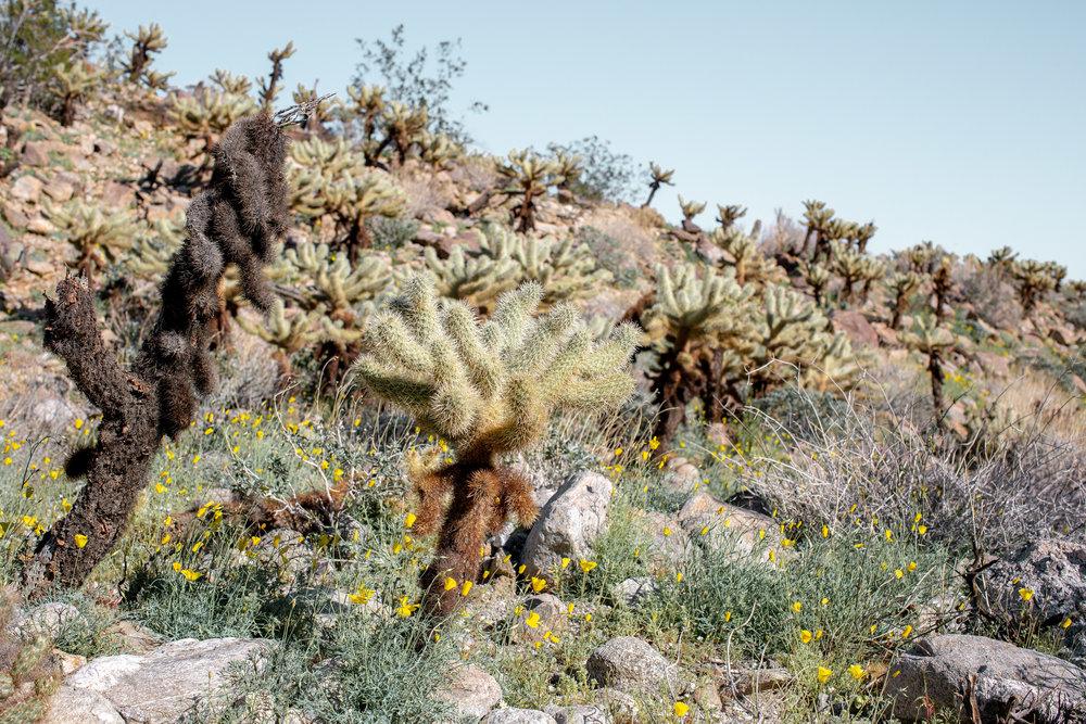 fizz-fade-super-bloom-desert-5.jpg