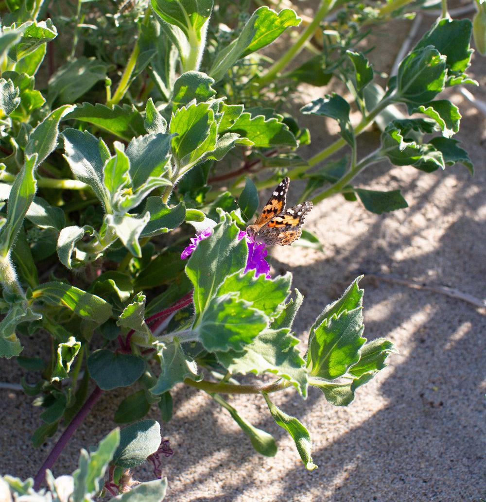 fizz-fade-super-bloom-desert-17.jpg