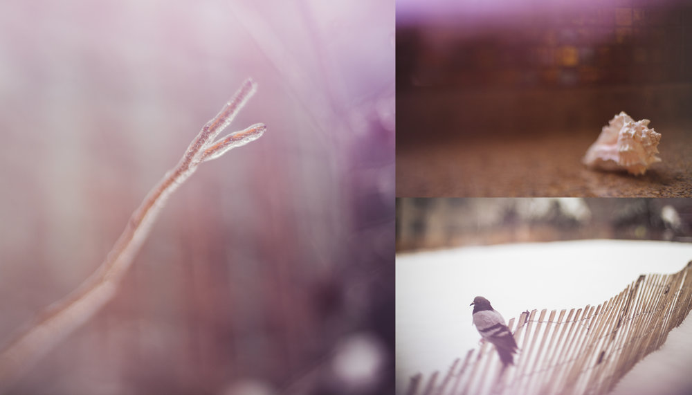 I'm really digging the lilac colored light leaks here...