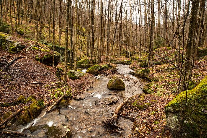 morrison-trail-allegheny.jpg