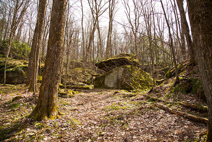 tanbark-trail-rocks.jpg