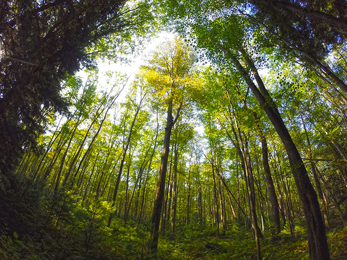 tanbark-trail-spring.jpg
