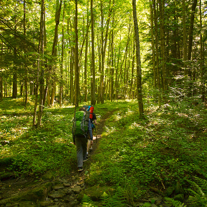 Allegheny National Forest hiking trails