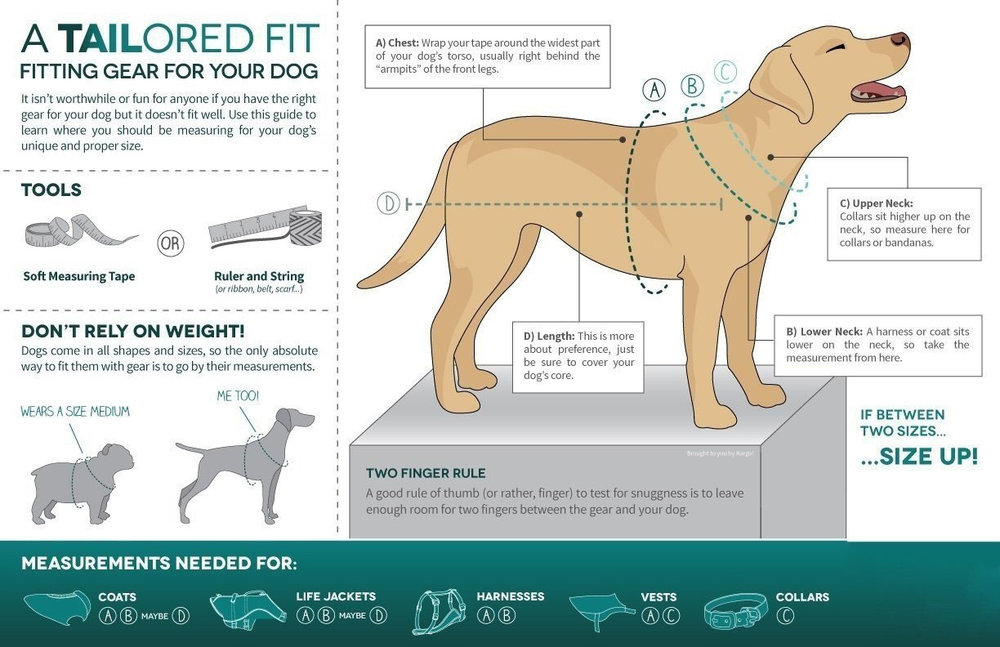 dog-vest-fit.jpg