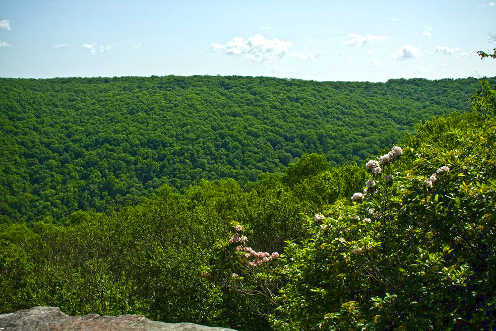 Minister Creek trail overlook in the Allegheny National Forest