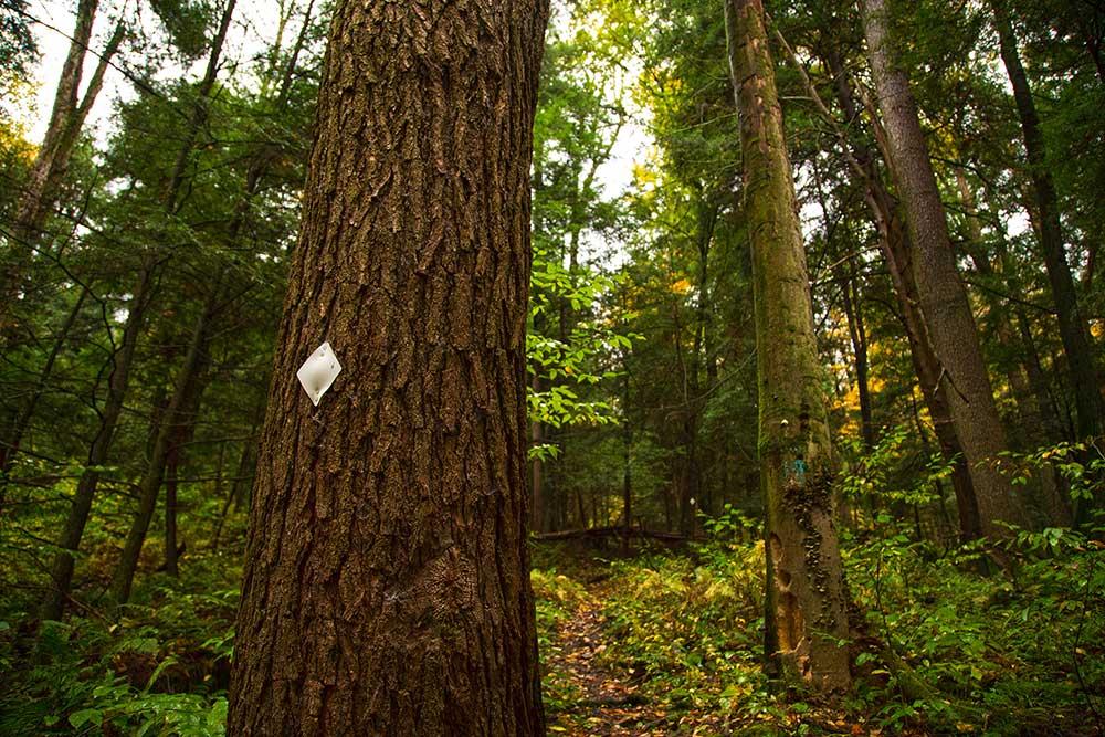 Tanbark Trail Route 62 Trailhead