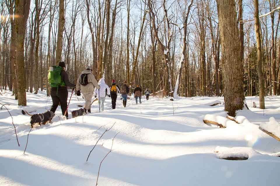 Snowshoe hike on Morrison Trail