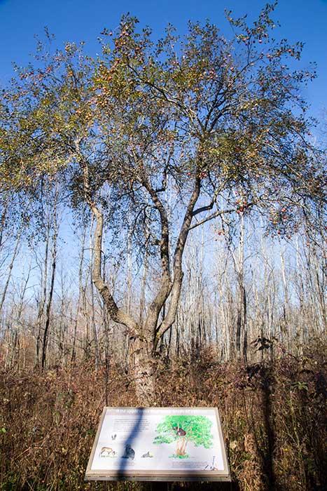 timber-4.jpg
