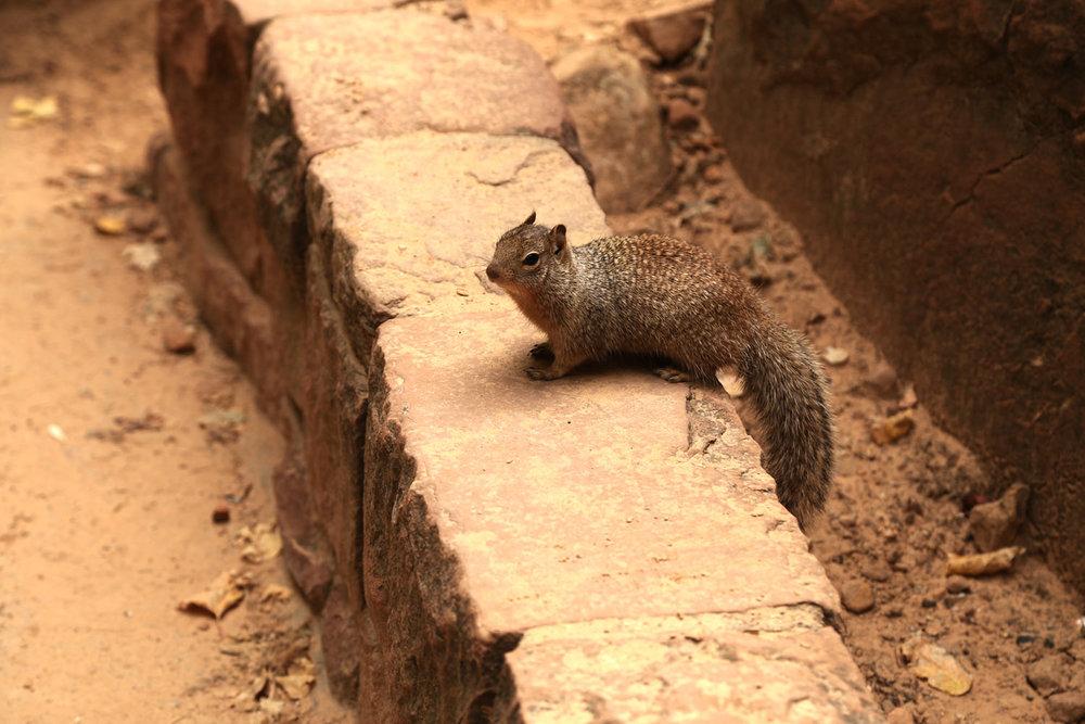 zion-squirrel.jpg