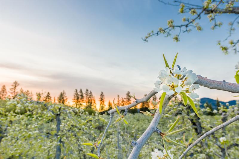 Premium Harvest-23.jpg