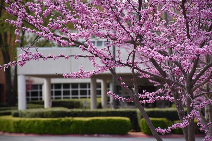 center for nonprofits at St. Mary's in Rogers flowers, trees, nwark, northwest arkansas, ark, springdale
