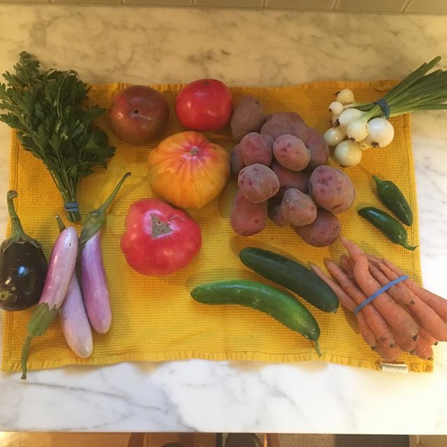Yesterday's CSA share! Eggplant, parsley, tomatoes, potatoes, cucumbers, carrots, jalapeños, onions