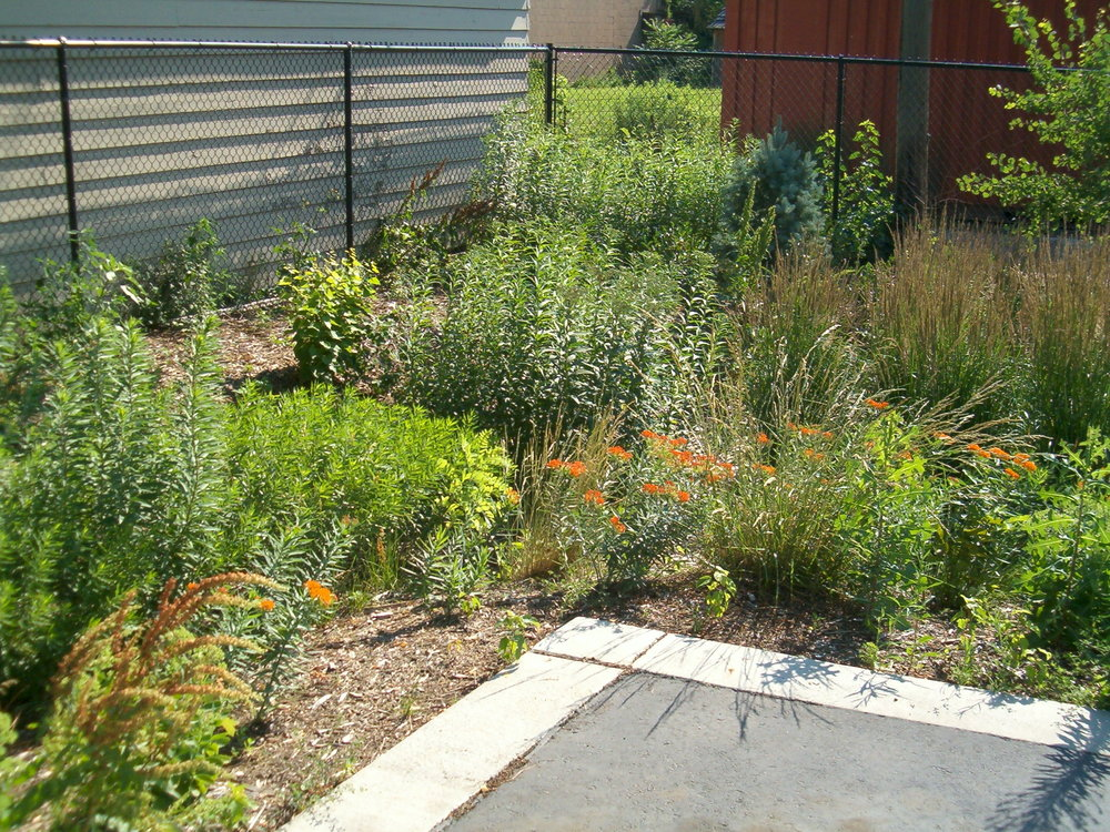 Runoff from the impervious pavement helps this rain garden thrive.