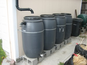 Rain barrels can be linked together for additional storage.