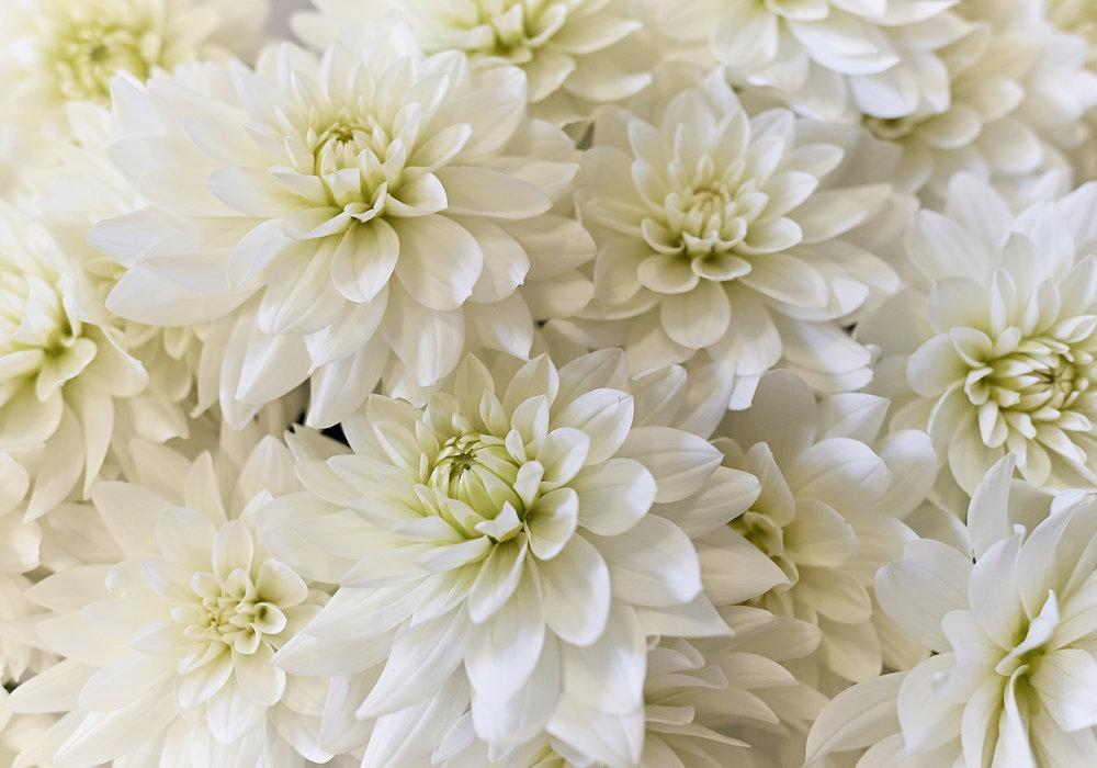 Begrafenis GD_2016_07_15_DSC9339.jpg