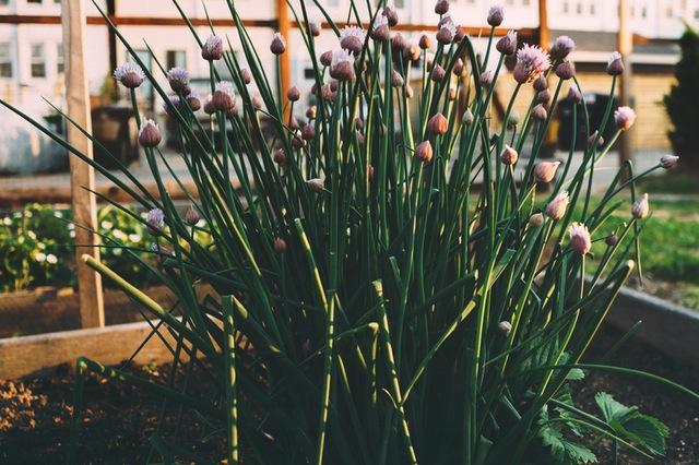 flowers-garden-herbs-flowerbed