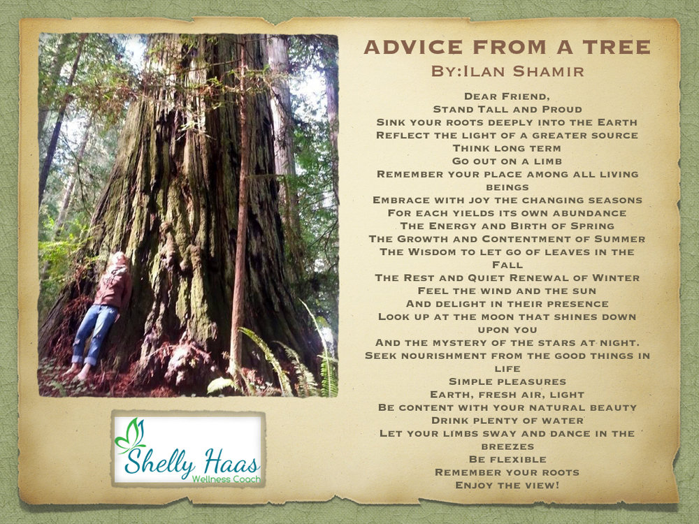 advice from a tree.001