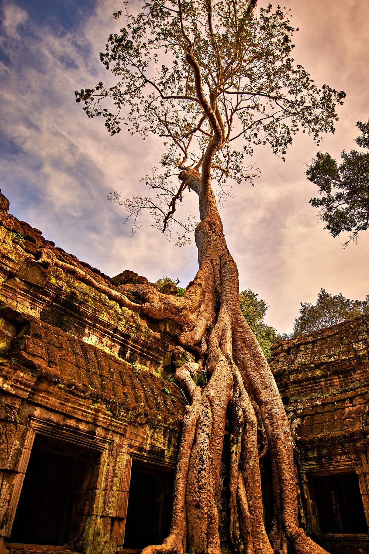 Rosewood Cambodia 0562rgb.jpg