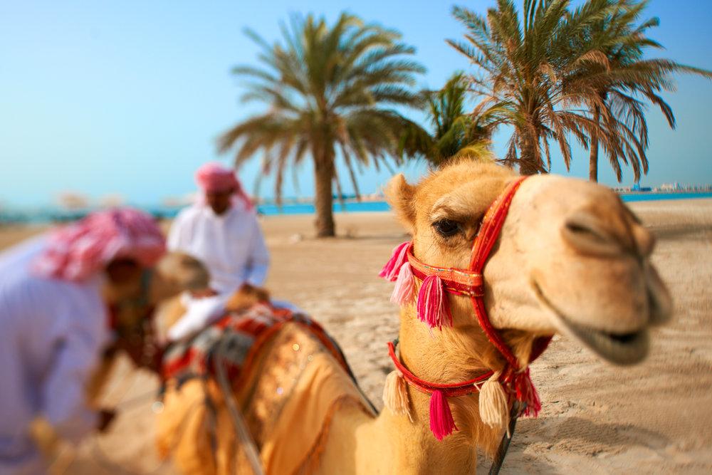 Rosewood Abu Dhabi 0464.jpg