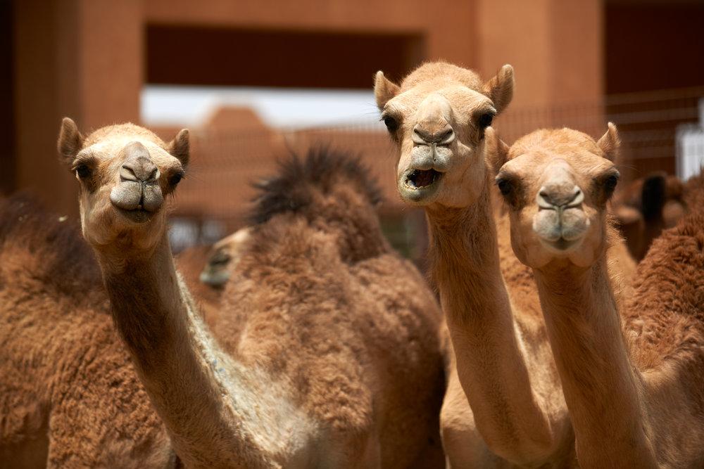 Rosewood Abu Dhabi 1297.jpg