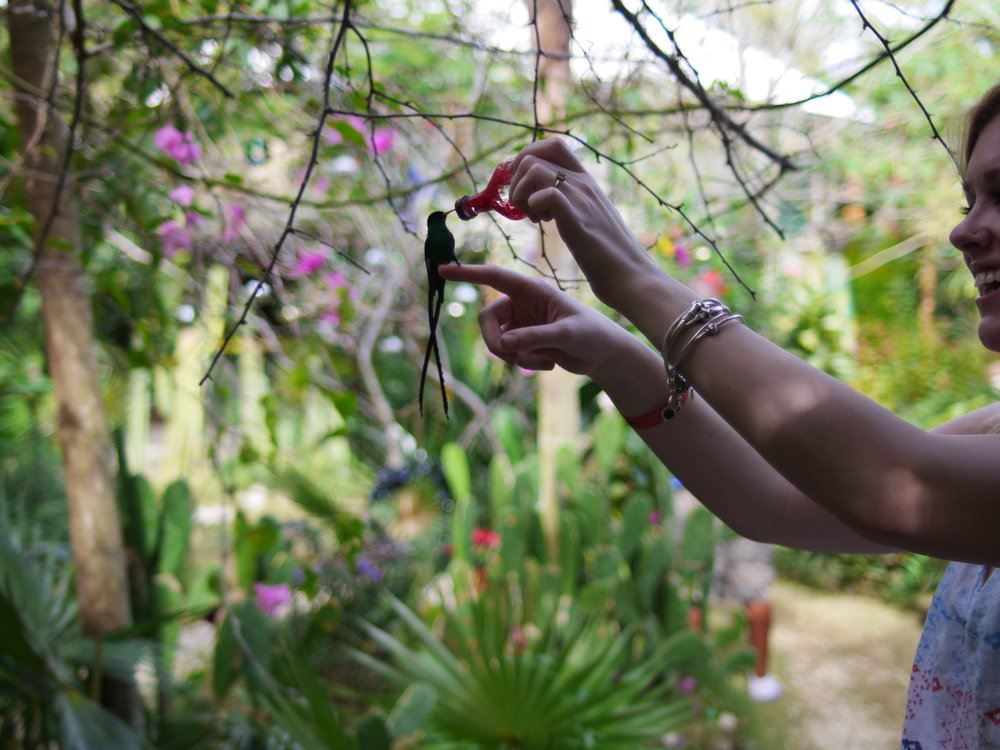 Adventure tourism and experiential tourism are huge intrinsic motivators for me! Here is a picture of my sister at Barney's Hummmingbird Garden in Negril, Jamica.