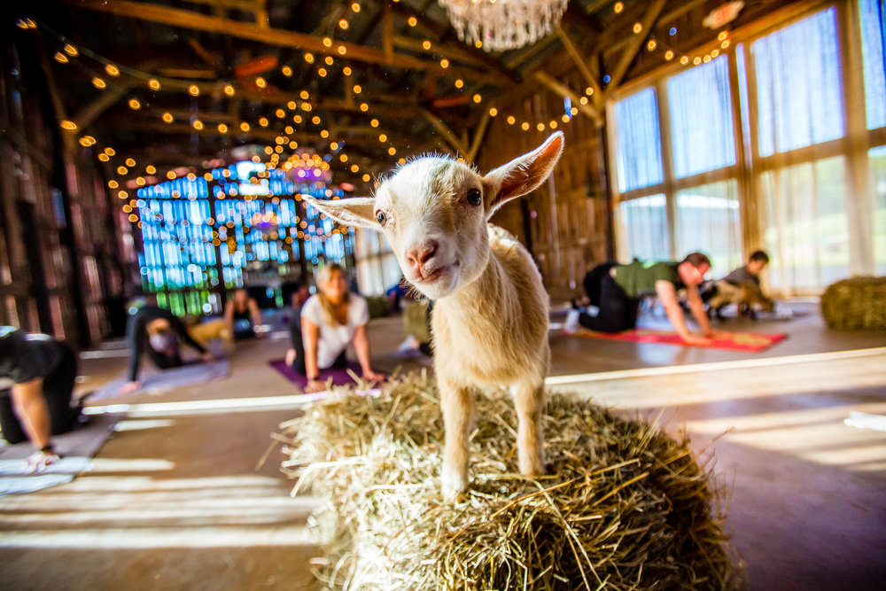 Events — Gilbertsville Farmhouse – Weekend Wedding Venue