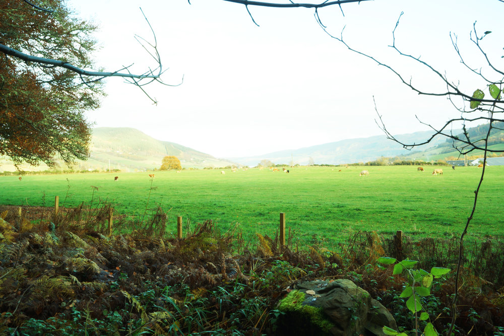 pastures.jpg