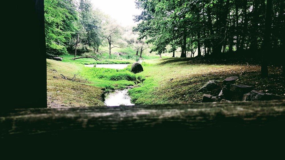 M Albertell Forest.jpg