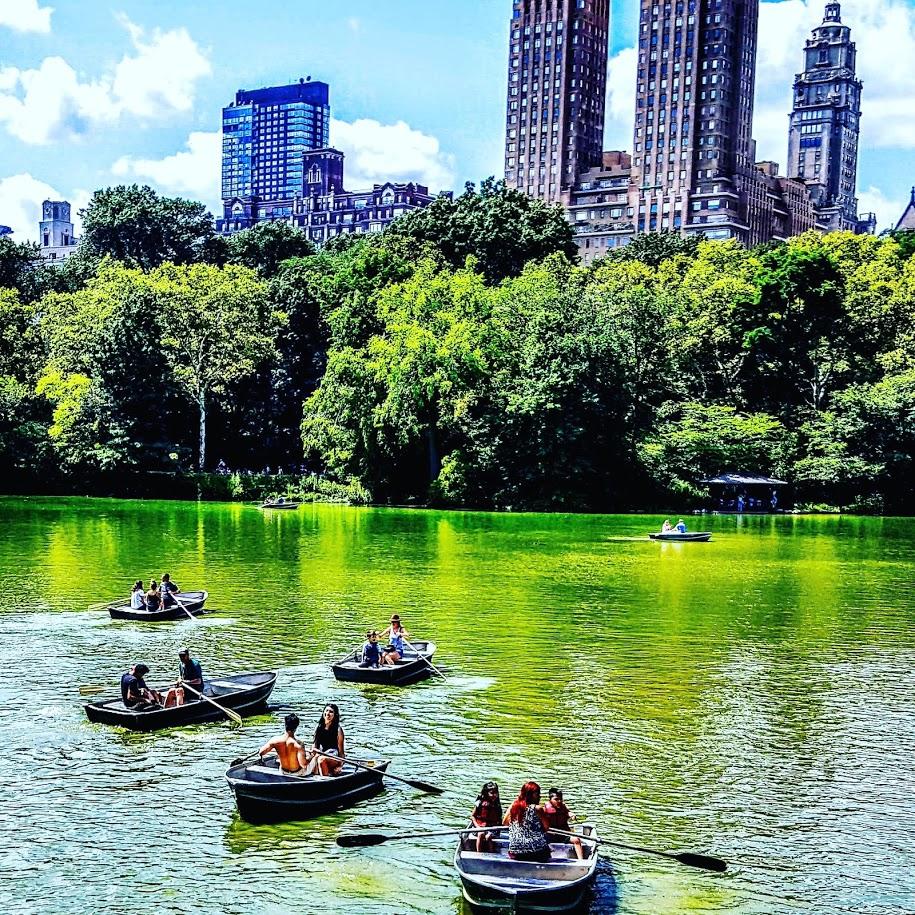 Central Park Matt Albertell.jpg