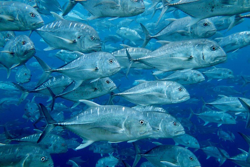 Yonge Reef (1).JPG