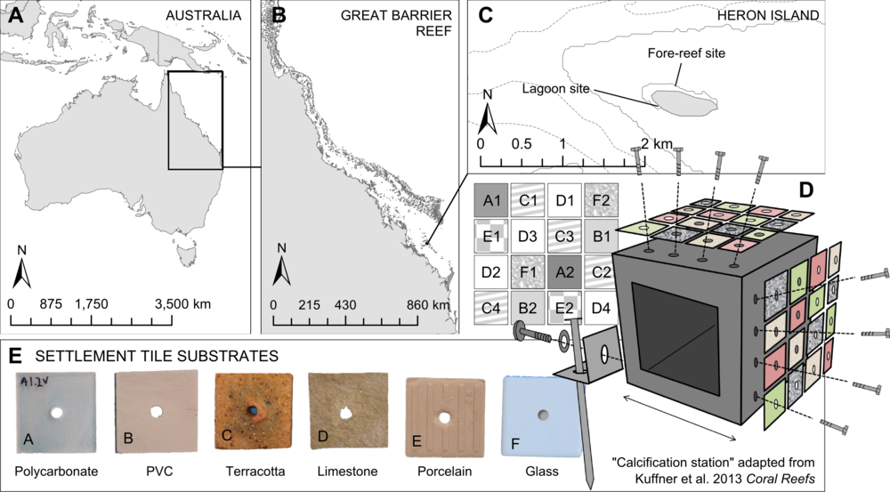 - Testing suitability of different tile types for studying corallinae algae. Location of experimental field sites (A−C), where arrays of different tile materials (D) were deployed onto experimental blocks (E). Tiles were arranged in a specific pattern (F) to ensure that each block was identical and replicate tiles were found both on the inside and edge of each vertical and horizontal panel arrangement.