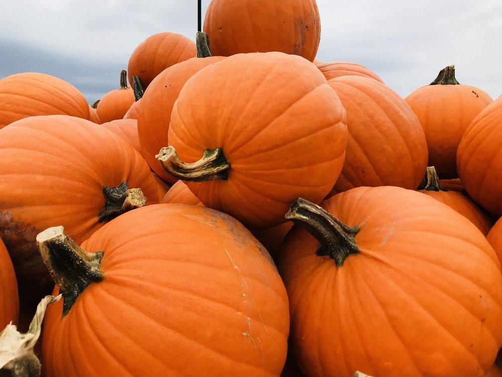 pumpkin-2857894_1920.jpg
