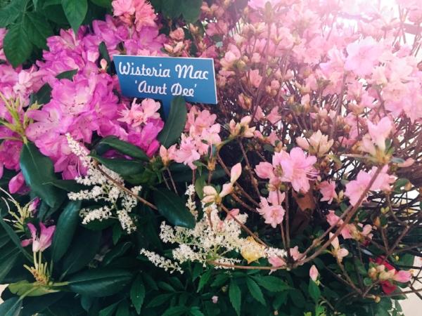 Macys_Flower_Show7.JPG