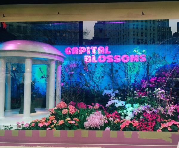 Macys_Flower_Show.JPG